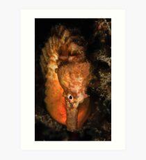 Big Bellied Seahorse Art Print