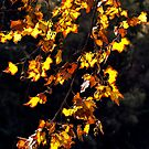 Autumn Leaves by Sandra Chung