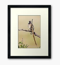 Mousebird Framed Print