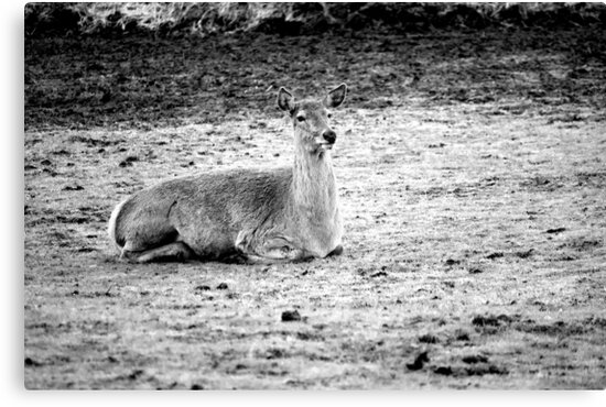 Red Deer by Neil Clarke
