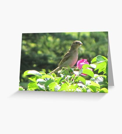 The Visitor Greeting Card