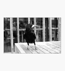 The Rook Photographic Print