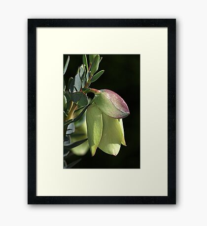 Unusual Nature Framed Print