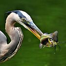 Success And The Great Blue Heron by Kathy Baccari