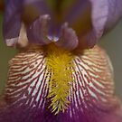 Naked Lady flower detail blooming color squared by Jason Franklin
