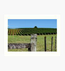 fenced grapevines Art Print
