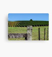 fenced grapevines Leinwanddruck