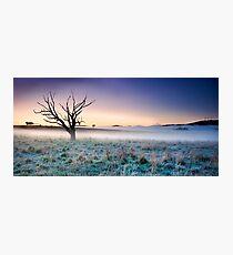 Old Tree Carcoar, NSW, Australia Photographic Print