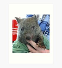 Lulu another rescued wombat baby (Joey) Art Print