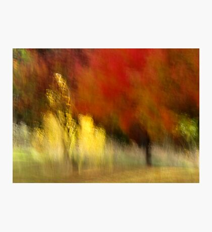 My Autumn View Photographic Print