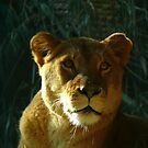 Lioness #2 by Sharon Brown