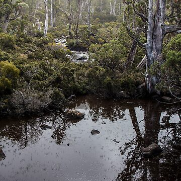 Mt Field National Park - Tarn by Evolve