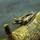 Frog on a Log by diggle