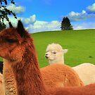 English Llama's, very rare breed !!. by Ian Alex Blease