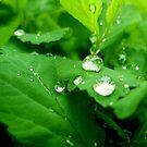 Morning dew 2 by ciriva