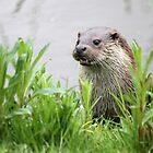 Otter by Christopher Lloyd