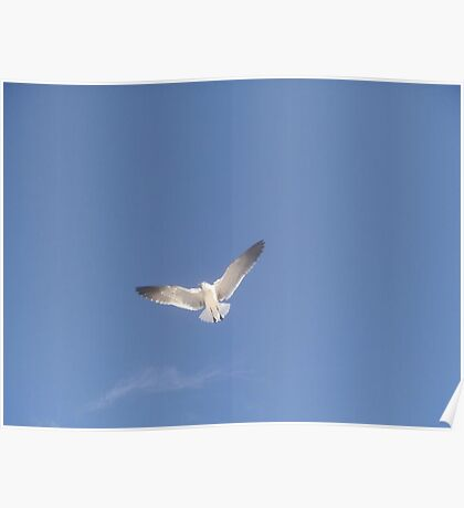 The Lone Tern Poster