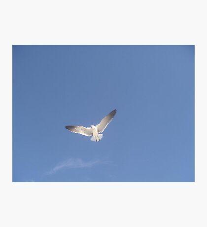 The Lone Tern Photographic Print