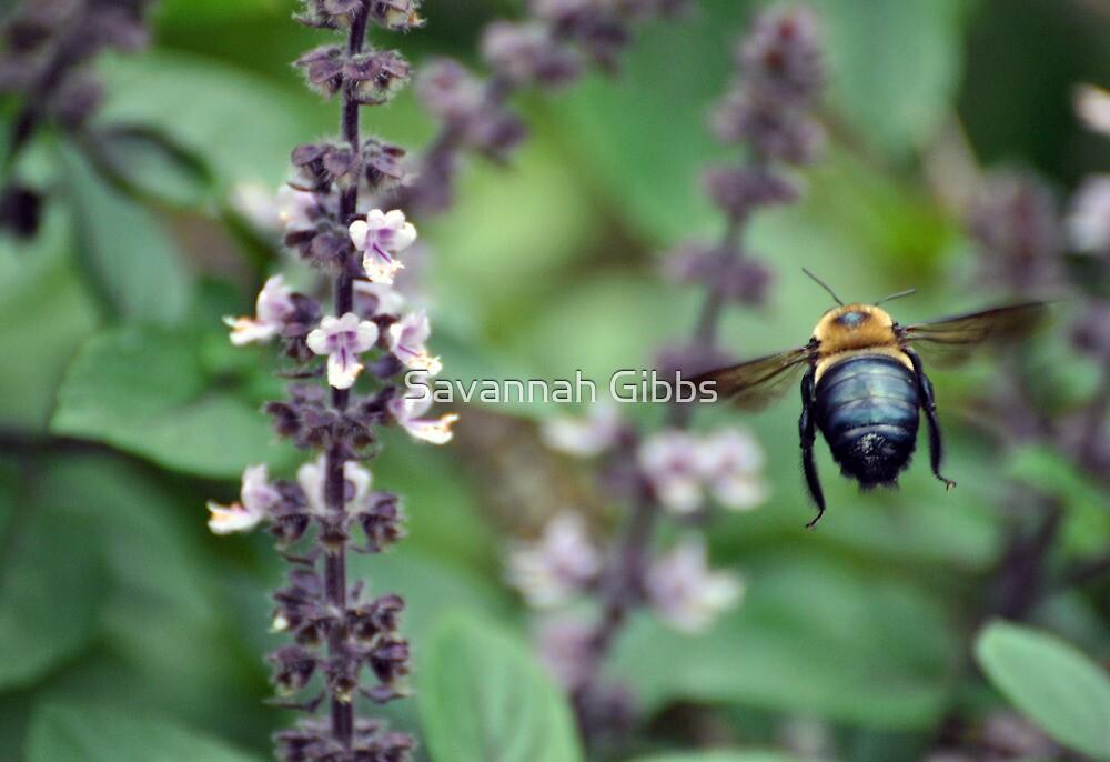 Bumblebee and Lavender by Savannah Gibbs
