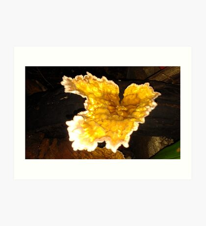 Yellow fungi in my garden, Art Print