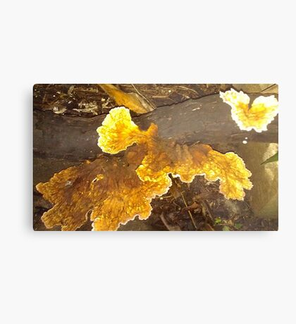 Yellow Fungi in my Garden Metal Print