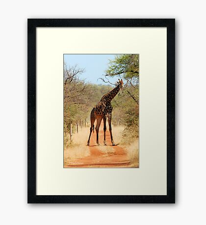 SORRY..., TAKE ANOTHER ROAD! - THE GIRAFFE – Giraffa Camelopardalis (KAMEELPERD) Framed Print