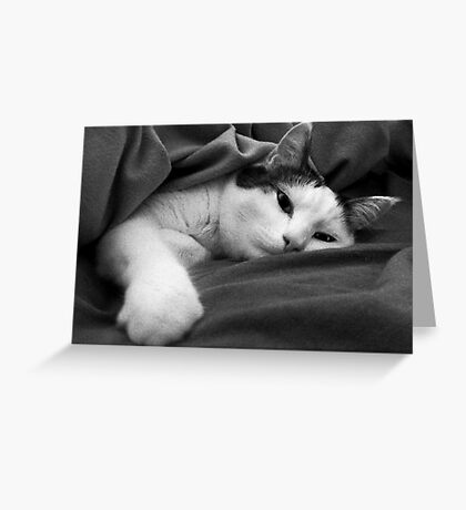Munchkin in Mama's bed! Greeting Card