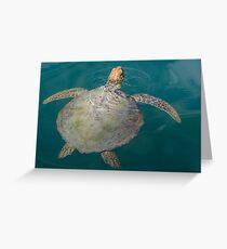 Green Turtle - Monkey Mia - WA Greeting Card