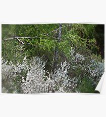 Colorful spring . Magura Małastowska . Welcome to Lemkivshchyna (Ukrainian: Лeмкiвщина, Lemko: Lemkovyna (Лeмкoвина), Polish: Łemkowszczyzna). may.2012. Poster