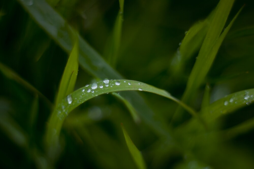 Rain drops on grass by Vicki Field