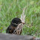 Busy Bird by Grace Anthony Zemsky
