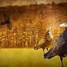 Ravens at Hall Lake by Randall Nyhof
