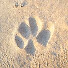 Paw print in the sand by James1980