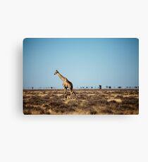 Giraffe escapes the photographers! Canvas Print
