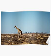 Giraffe escapes the photographers! Poster