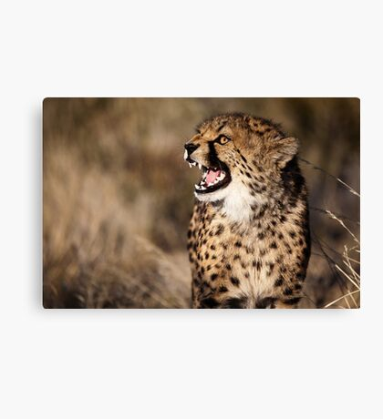 Cheetah Cub Canvas Print