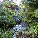 Quail Gardens Tropical Splendor by Joni  Rae