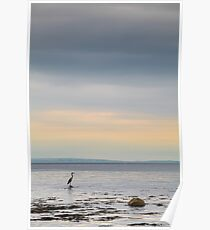 Solitary Heron Poster