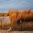 Dune Grass & Fence by Debra Fedchin