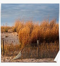 Dune Grass & Fence Poster