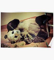 Flopsy Pandy Poster