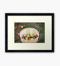 Apple Picking Framed Print