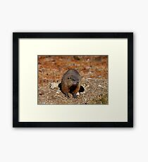 How Much Wood Could a Wood Chuck Chuck Framed Print