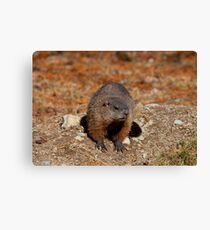How Much Wood Could a Wood Chuck Chuck Canvas Print