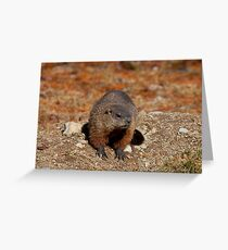 How Much Wood Could a Wood Chuck Chuck Greeting Card