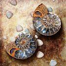 Ammonis Cornua in Color by Yanko Tsvetkov