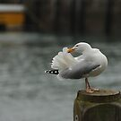 Seagull in the harbour at Ilfracombe by James1980