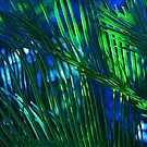 Beautiful Blue Palm by Jeff Johannsen