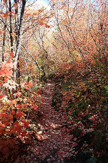 Path Less Traveled By by Jewel Pfaffroth