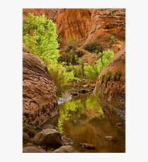 Willow Gulch Photographic Print